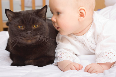 Peraturan Memelihara Binatang Saat Ada Bayi